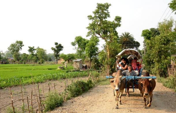 tharu ox cart stroll