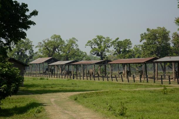 z elephant breeding centre many elephant huts