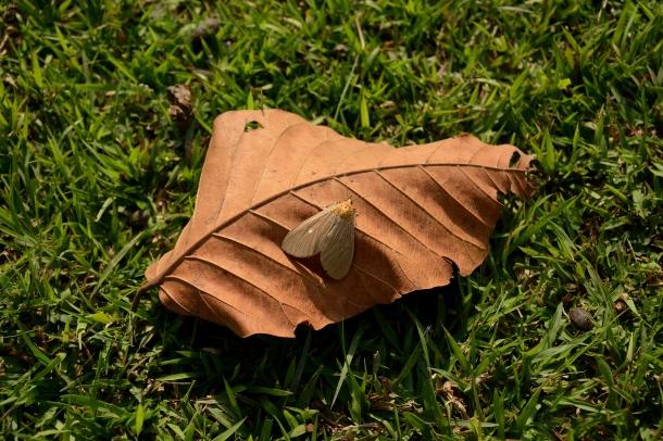 z mariposa on leaft