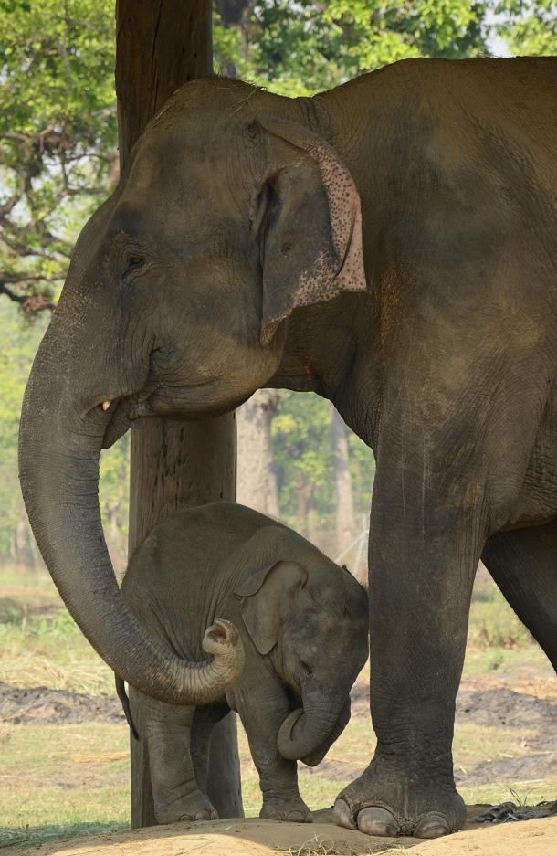 z mum and baby elephant