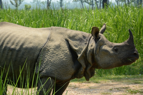 z rhino profile.JPG