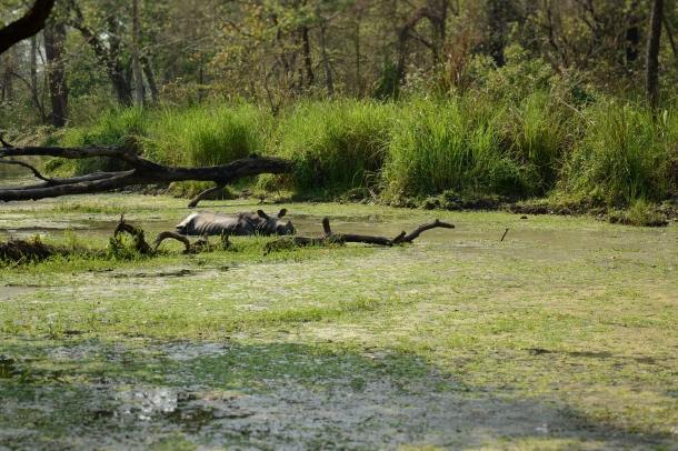 z spot the rhino on the lake.JPG